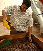 Gerösteter Kaffee in der Concepción de Ataco, Beneficio de Café (Produktionsstätte für mehrere Kaffeebauern).